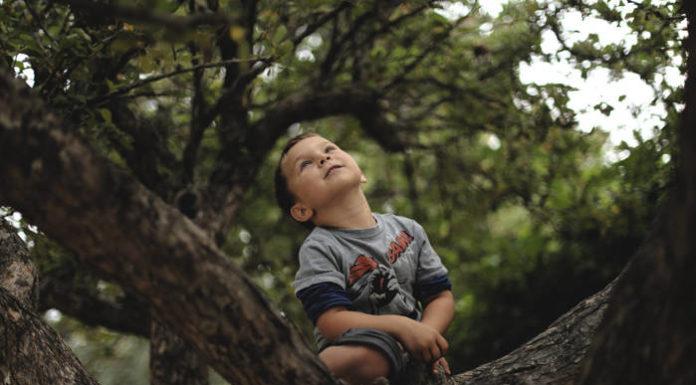 Garderoba małego mężczyzny – bluzy chłopięce